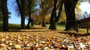 Herbst Gefahren - Beitrag
