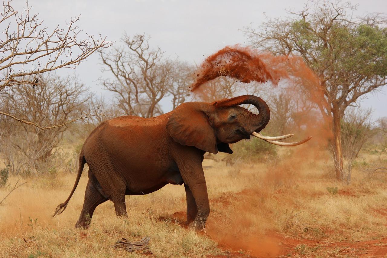 afrika-und-seine-tierwelt